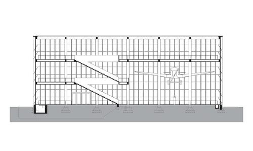 Longitudinal section.