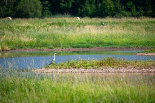 Ptačí park Josefovské louky; foto: Vojta Herout.