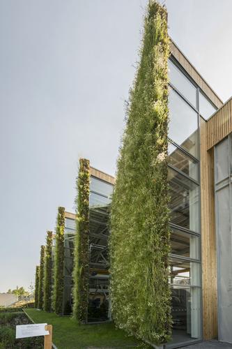 ýchodní fasáda porostlá zelení je tvarována tak, aby vzniklými záhyby mohlo do interiéru pronikat denní světlo.