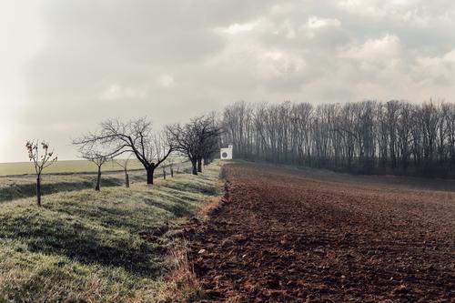 Kaple se vyjímá mezi lány polí, na hraně lesa, na konci třešňové aleje; foto: Matěj Chabera.